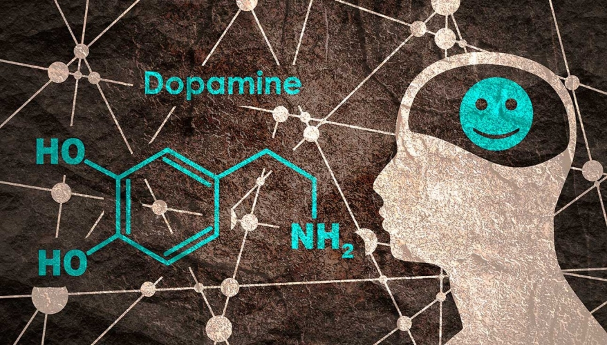 La dopamine, récompense du confinement